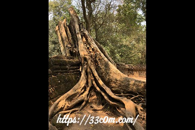 カンボジア旅行記_タプローム_2