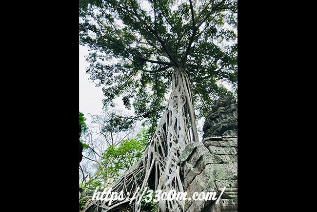 カンボジア旅行記_タプローム_3